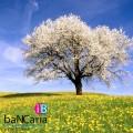decoracion-primaveral-pisos-de-banco